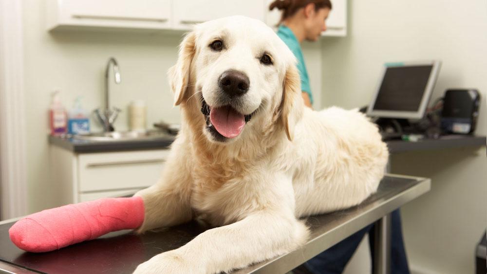 pet insurance Wintson-Salem NC