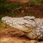 The Alligator in the Backyard: 5 Things to Include in Your Home Quote