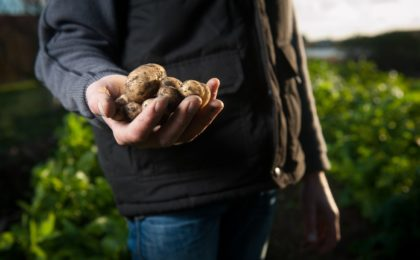 Farmer holding potatoes.
