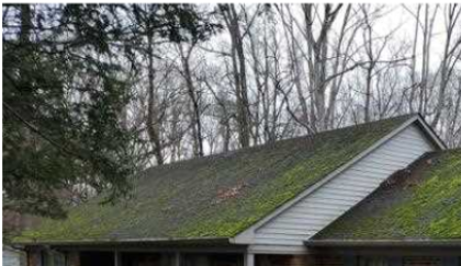 Moss covered roof.